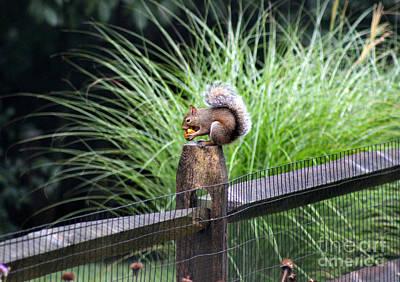 Photograph - Squirrel With Nut by Karen Adams