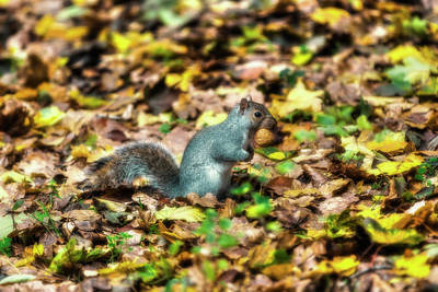 Photograph - Squirrel With Walnut by Roberto Pagani