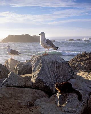 Photograph - Squirrell And Seagull Go To The Beach by John Brink