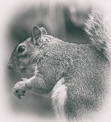 Funny Squirrel Photograph - Squirrell by Martin Newman