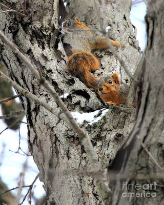 Photograph - Squirrels At Play by Angela Rath