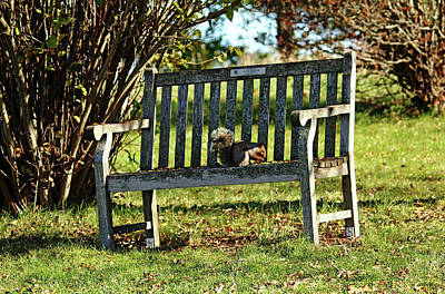 Photograph - Squirrels Dining Table by Debbie Oppermann