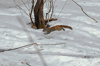 Galop Photograph - Squirrel's Galop  by Asbed Iskedjian