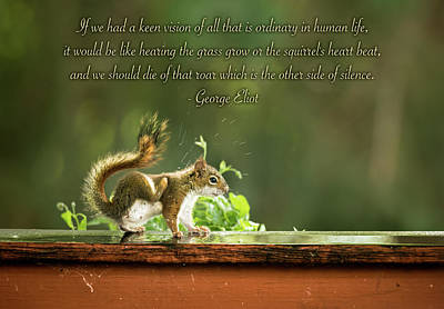 Photograph - Squirrel's Heart Beat-george Eliot by Onyonet  Photo Studios