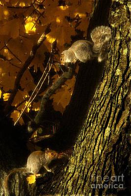 Photograph - Squirrels by Jeff Breiman