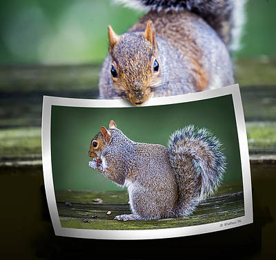 Squirrely Critique Art Print