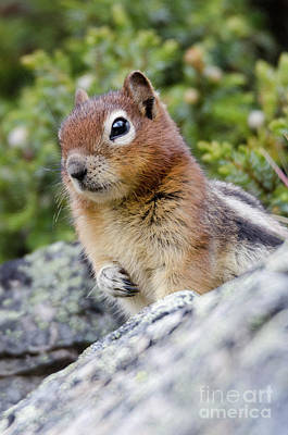 Photograph - Squirrely Cuteness by Dee Cresswell