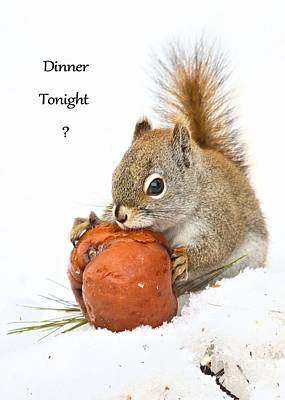 Photograph - Squirrely Invite To Dinner by Debbie Stahre