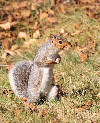 Art Print featuring the photograph Squirrely Me by Debbie Stahre