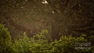 Photograph - Sri Lankan Leopard  by Venura Herath