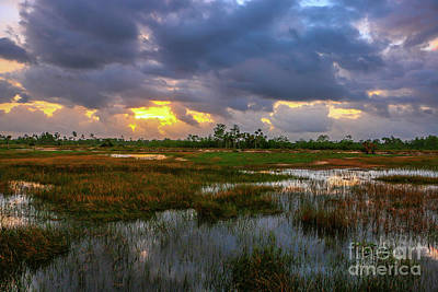 Photograph - Srormy Marsh At Pine Glades by Tom Claud