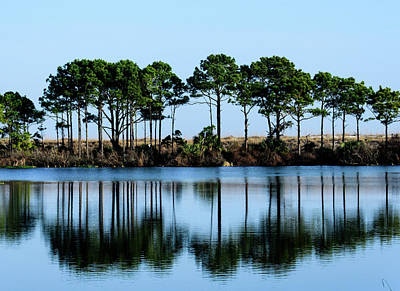 Photograph - St Andrews State Park by Randy J Heath