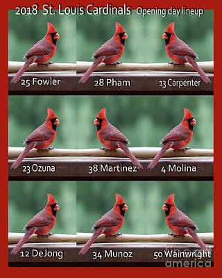 Photograph - St. Cardinals Home Opening Day Lineup  by John Freidenberg