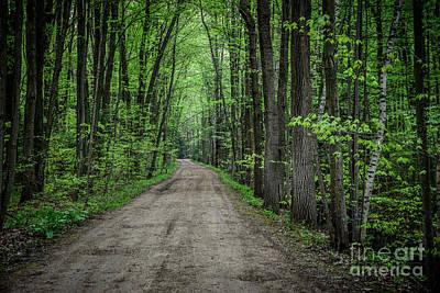 Photograph - St. Clair Woods by Grace Grogan
