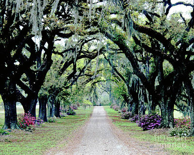 St Francisville Plantation Art Print