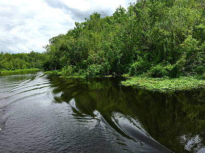 Photograph - St. John's River by Denise Mazzocco