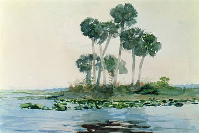 Palm Drawing - St John's River Florida by Winslow Homer