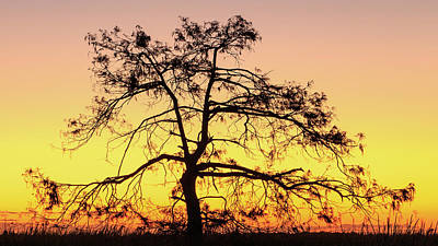 Photograph - St Johns River Tree by Stefan Mazzola