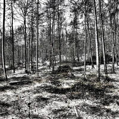 Landscape Photograph - St Lawrence's Wood, Hartshill Hayes by John Edwards