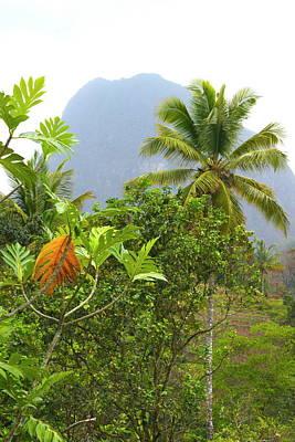 Photograph - St. Lucia Piton by Daniel Jean-Baptiste