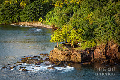 Photograph - St Lucia - Trees On A Rocky Point by Brian Jannsen