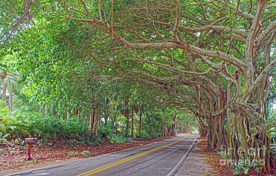 Photograph - St. Lucie Blvd. 2 by Larry Nieland