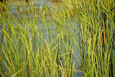 Photograph - St. Marks Cattails by Jan Amiss Photography