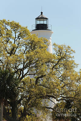 Photograph - St Marks Lighthouse With Spring Oak by Carol Groenen