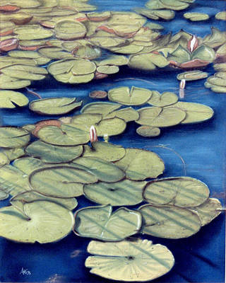 Pastel - St. Marks Waterlilies by Jan Amiss
