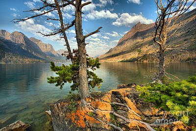 Photograph - St. Mary Through The Trees by Adam Jewell