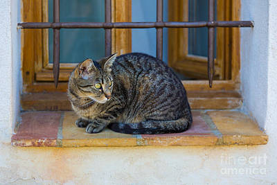 Sill Photograph - St Paul Cat by Inge Johnsson