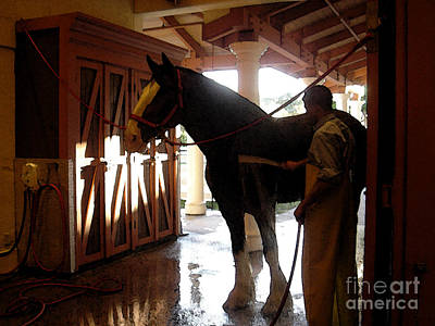 Photograph - Stable Groom - 1 by Linda Shafer