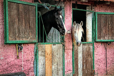 Photograph - Stable Mates by JAMART Photography