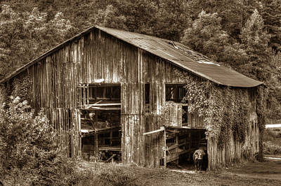Photograph - Stacy Fork Barn And Black Cow by Douglas Barnett
