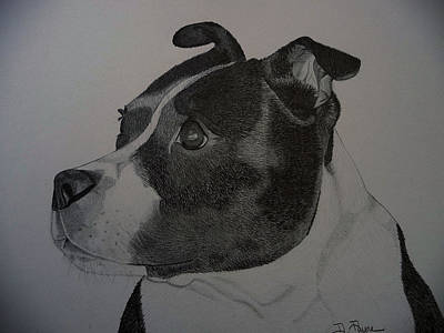 Mutt Drawing - Staffie The Dog by Debbie Payne