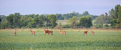 Photograph - Stag Party by Bonfire Photography