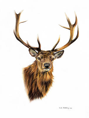 Oil Drawing - Stag by Sarah Stribbling