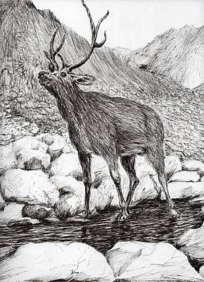 Stag Print by Vincent Alexander Booth