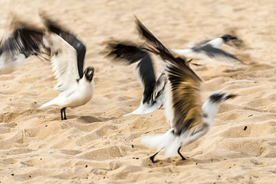 Photograph - Stages Of Flight by Wayne King