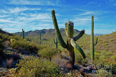 Photograph - Staggering Cactus by David Arment