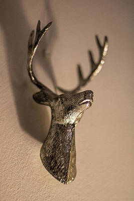 Trophy Buck Photograph - Stags Head by Martin Newman