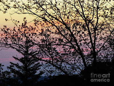 Photograph - Stained Glass Sunset by Robert Ball