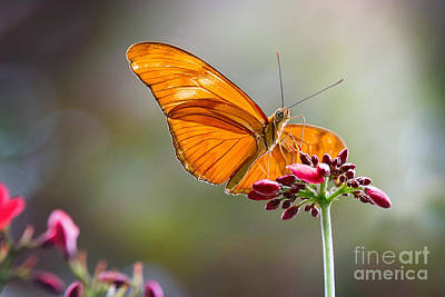 Stained Glass Wings Art Print