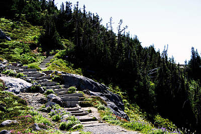 Photograph - Stairs Along Skyline Trail by Edward Hawkins II
