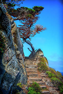 Photograph - Stairway At Point Lobos Ca Img_1674 by Greg Kluempers