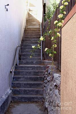 Photograph - Stairway To Heaven by Suzanne Oesterling