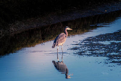 Photograph - Stalker Reflection by Bill Posner