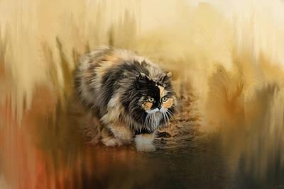 Staring Cat Photograph - Stalking Autumn by Jai Johnson