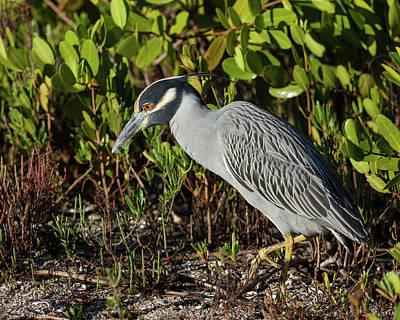 Photograph - Stalking Breakfast by David Watkins