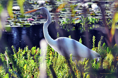Photograph - Stalking In The Pond by Kay Lovingood